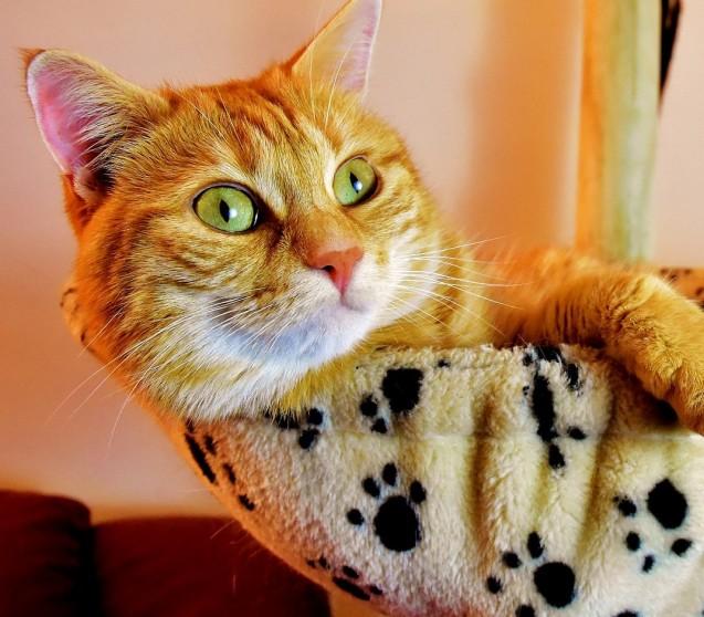 Anämie bei Katzen