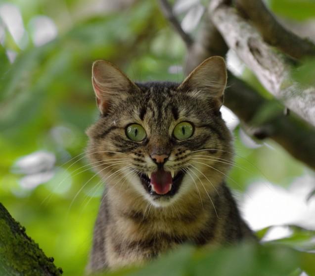 Futtermilben im Katzenfutter