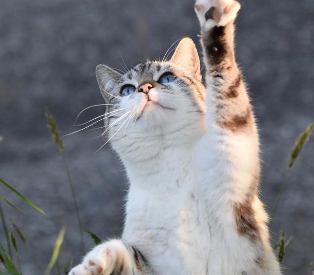 Wie erkennt man ein gutes Katzenfutter?