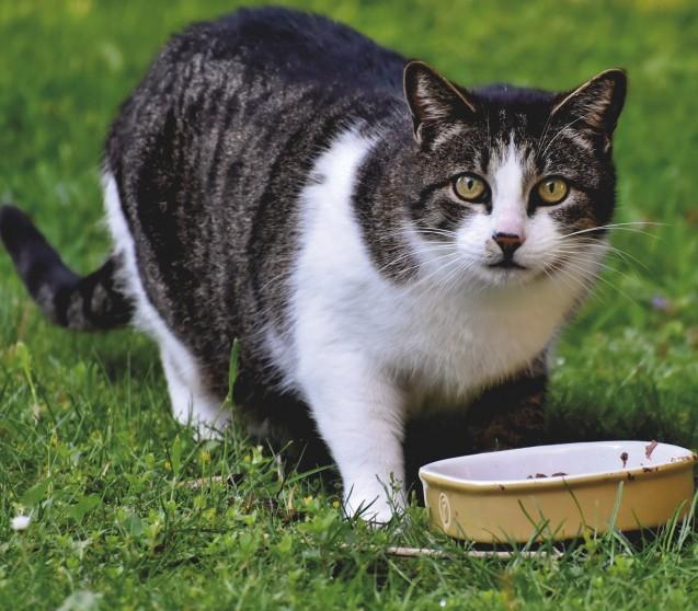 Insektenprotein? Ich dachte Katzen brauchen richtiges Fleisch