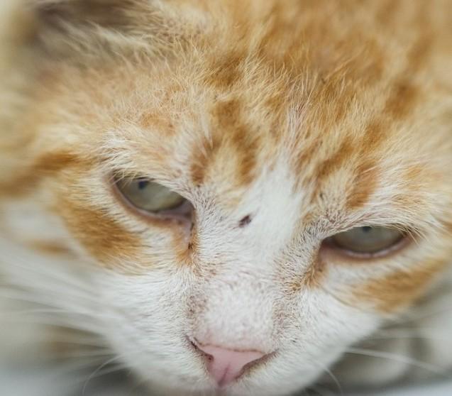Analdrüsen bei Katzen