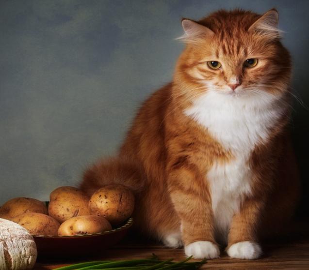 Was Katzen fressen