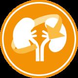 Schützt die Nieren